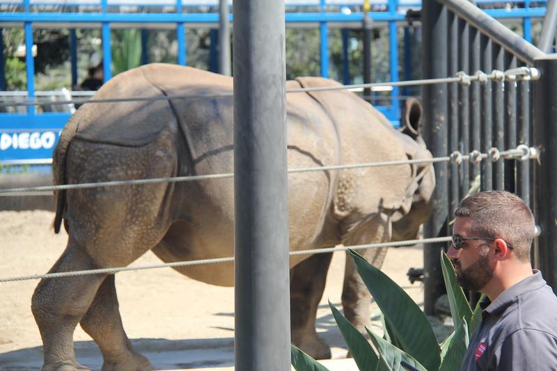 20170807-019 - San Diego Zoo - Rhinoceros.JPG