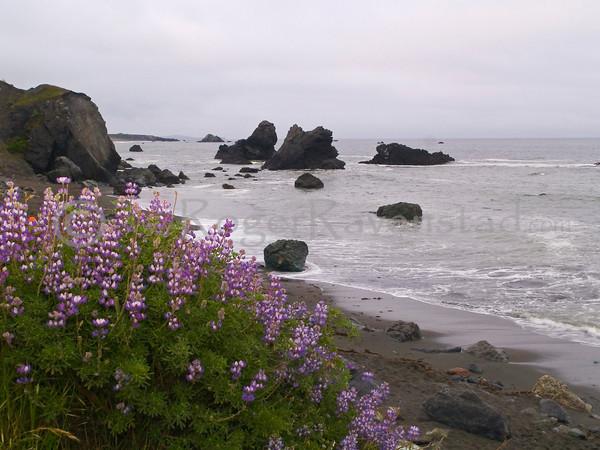 Shell Beach - Sonoma