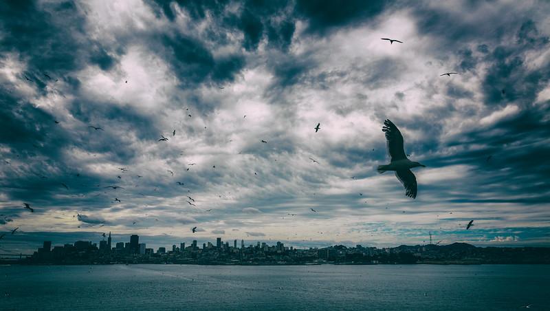 San Francisco from Alcatraz-.jpg