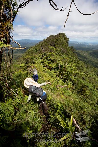 Peak of Mt. Tomanivi