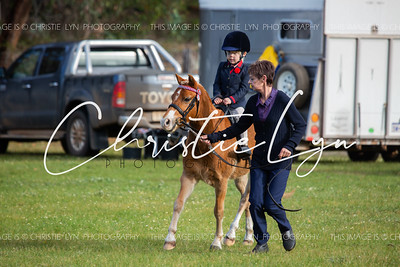 South West Show Horse Unofficial 20th July 2019