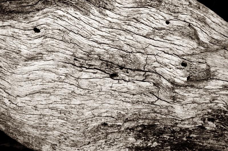 C Photo Lenswork 2006-12-27 Wood Study2198.jpg