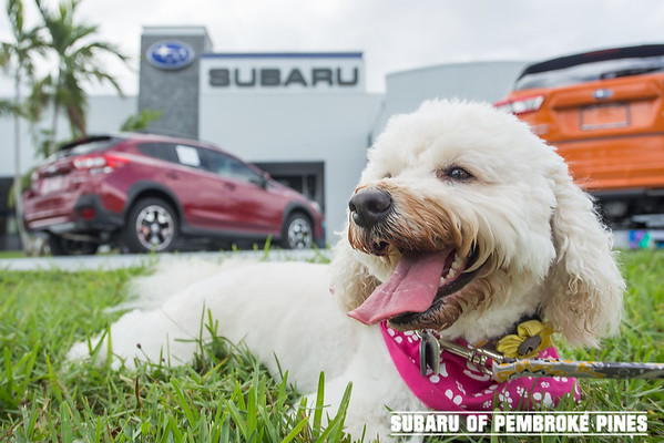 Subaru - Crosstrek Launch Party 2017