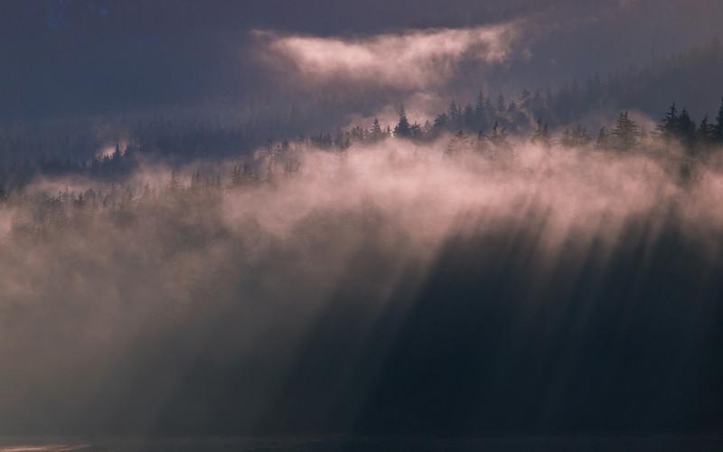 Sun through the fog of some Douglas Island trees.