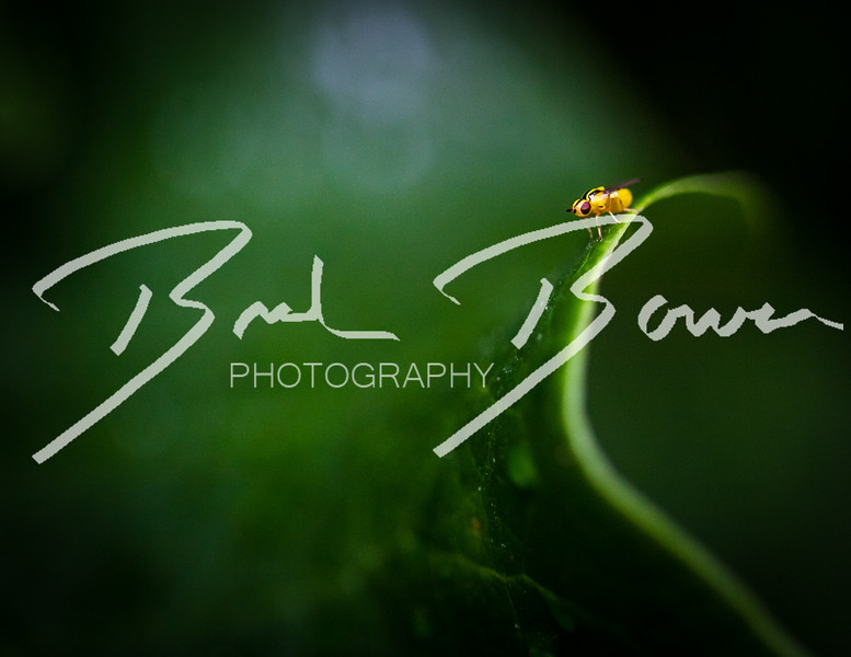 surfingbug.jpg