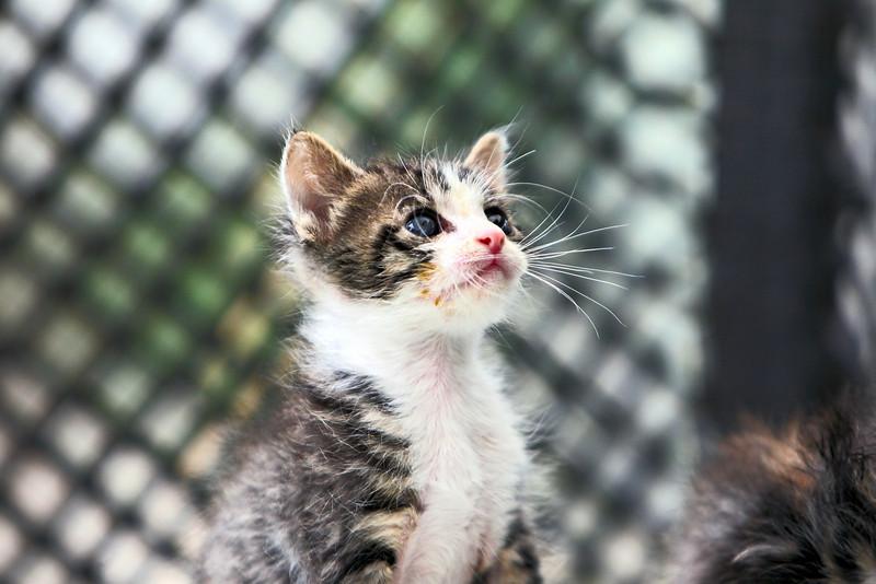 kittens_016-1.jpg