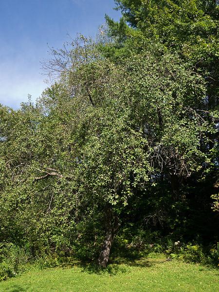 Tree # 3