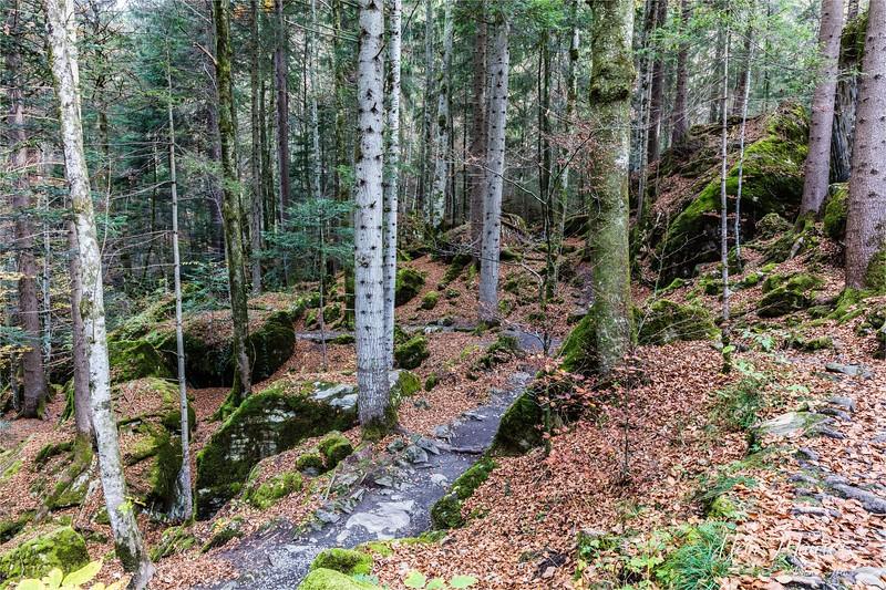 2017-10-26 Blausee - 0U5A7884.jpg