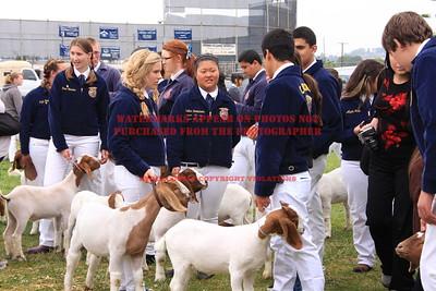 2011 LHVCF Goats