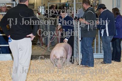 2016 KISD Swine Class 4