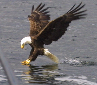 eagles from disc 025.jpg