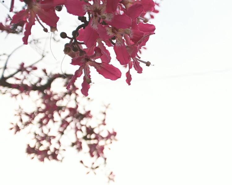 silkfloss-big.jpg