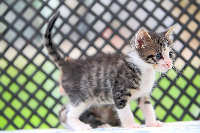 kittens_008-1.jpg
