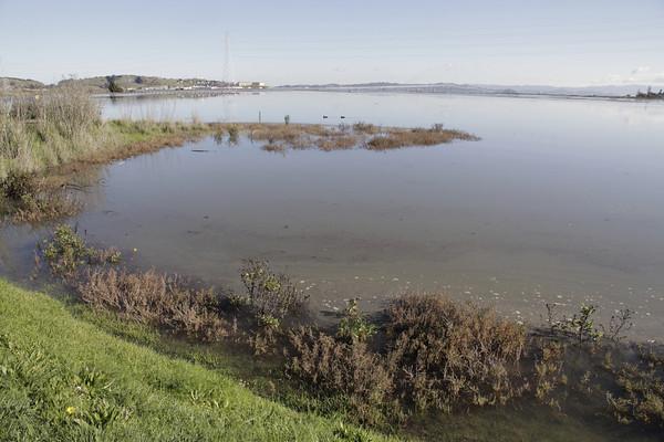 King Tide at Corte Madera Marsh 12/12
