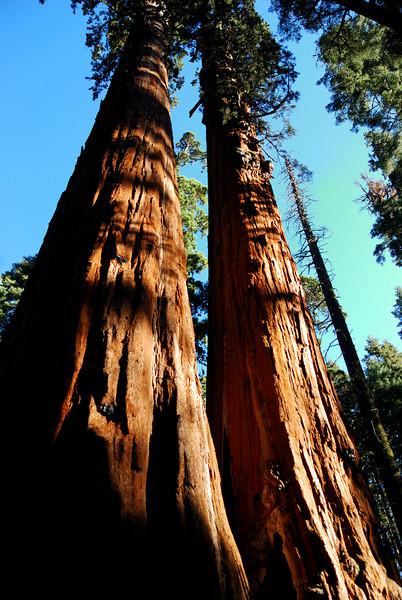 Calaveras Big Trees & Lake Alpine