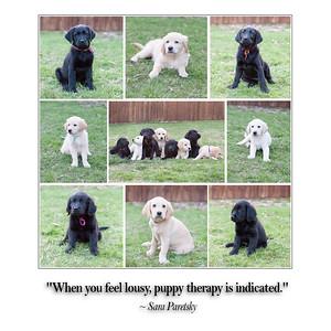 Janice Puppies