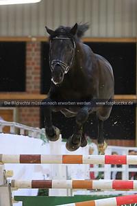 01.02.2014 Generalprobe zur Hengstparade Massener Heide am 02.02.14