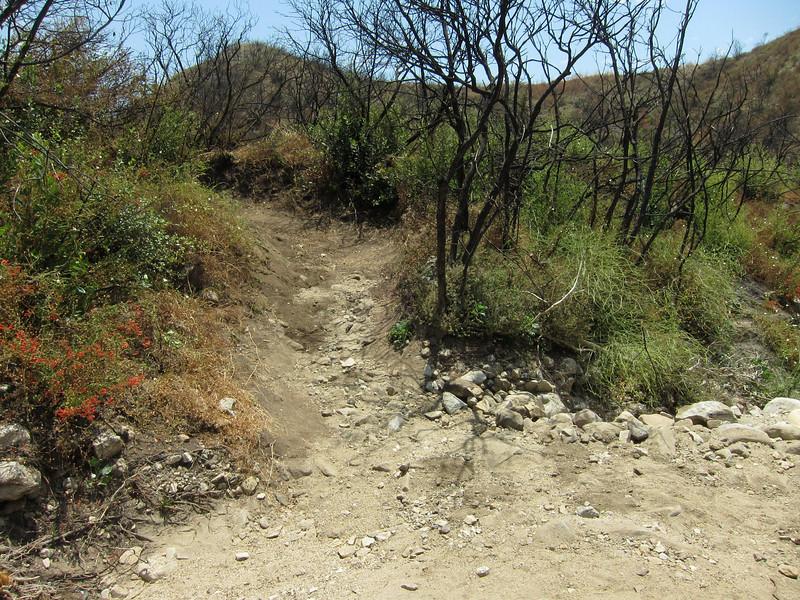 20100710048-Doc Larsen Trailwork CORBA.JPG