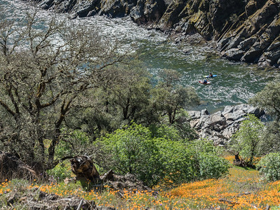 NF of the American River