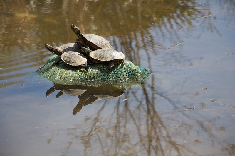 Turtles and Reflection