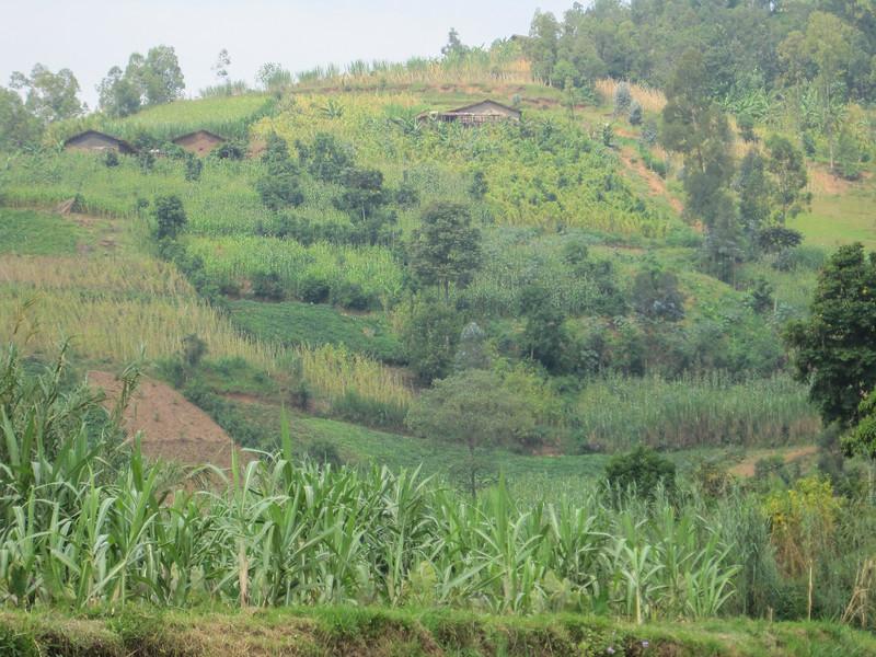 Rwanda_17_ixus-9071.jpg