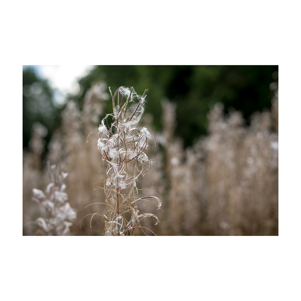 273_Plant_10x10.jpg