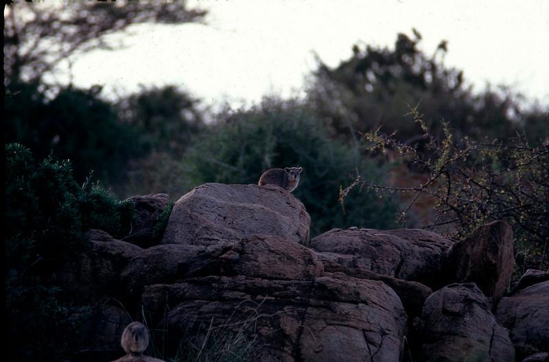 Kenya1_077.jpg