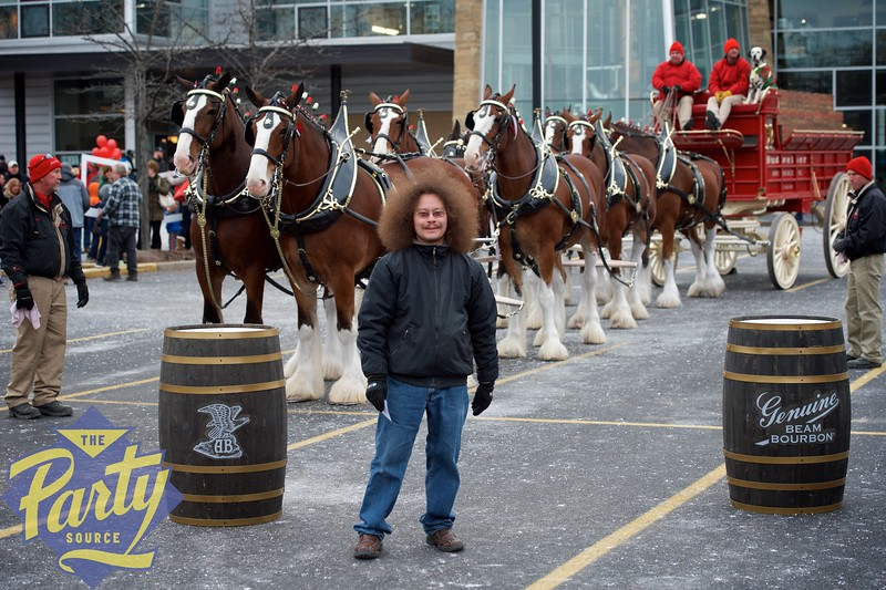 Clydesdale Portraits 36.jpg