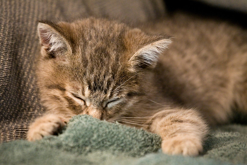 new-kitten-111319-04.jpg