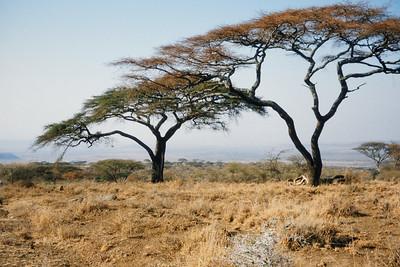 Tanzanie - Safari