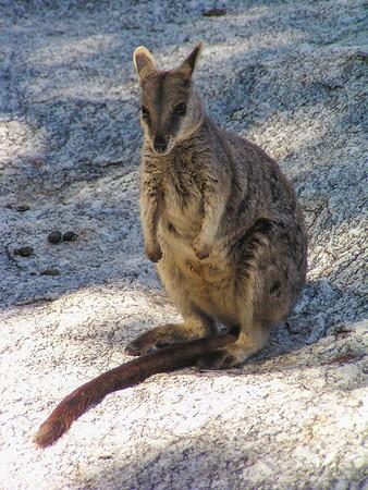Kangaroos and Kin