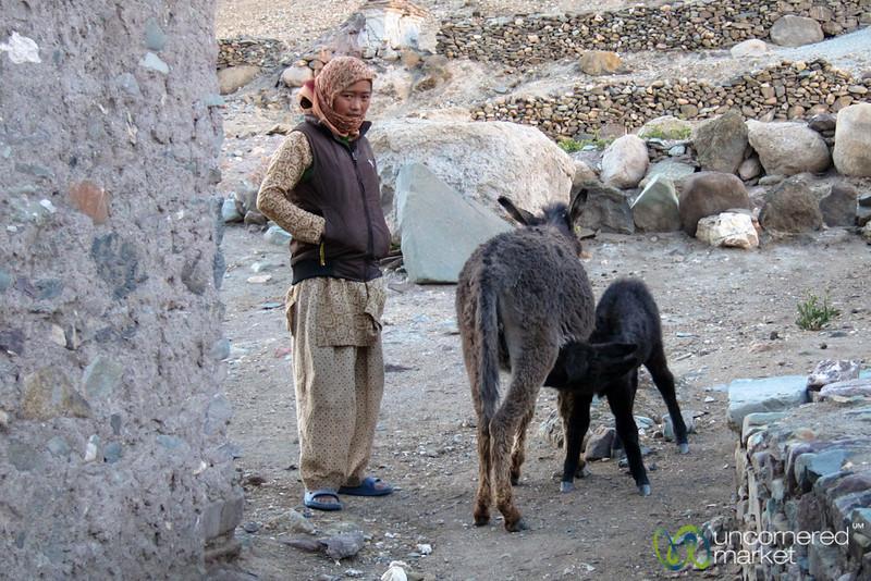Baby Donkey and Ladakhi Woman - Hankar Village, Ladakh