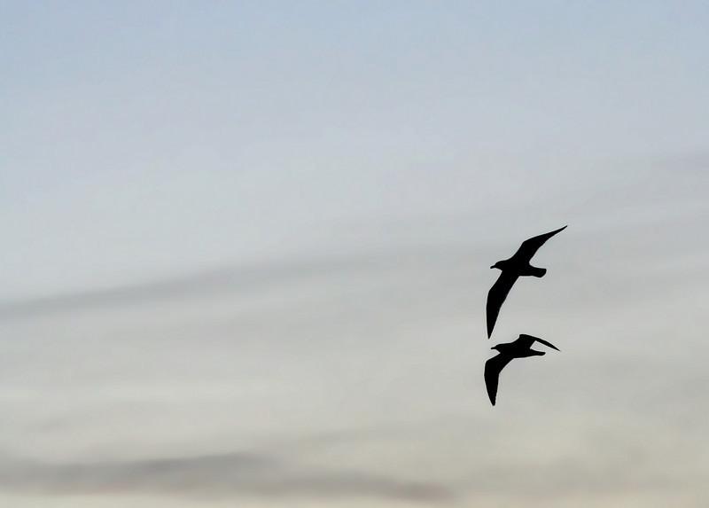 Bird silhouettes from Marina Park, San Leandro, CA