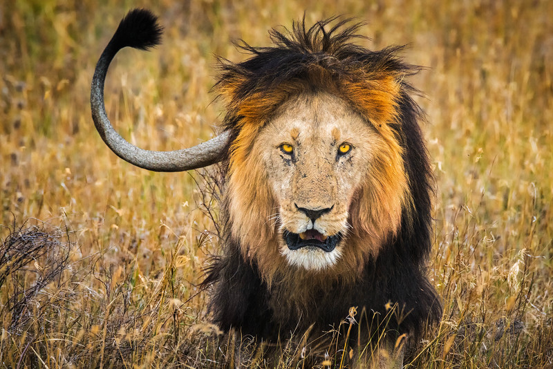 Tanzania-safari-21.jpg