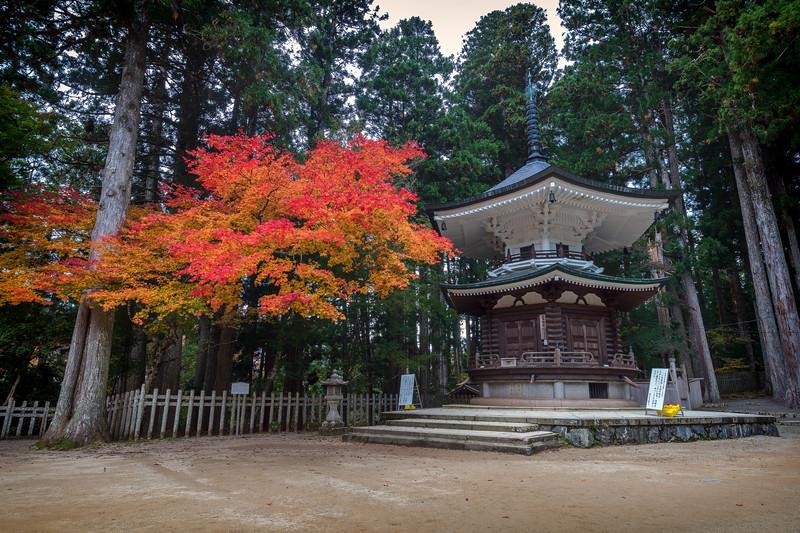 Koyasan fall leaves