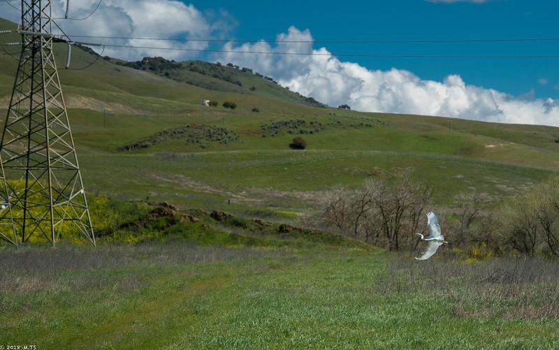 Heron at Coyote Creek Bike Trail