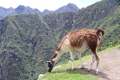 Peru, Ecuador and Galapagos Mammals