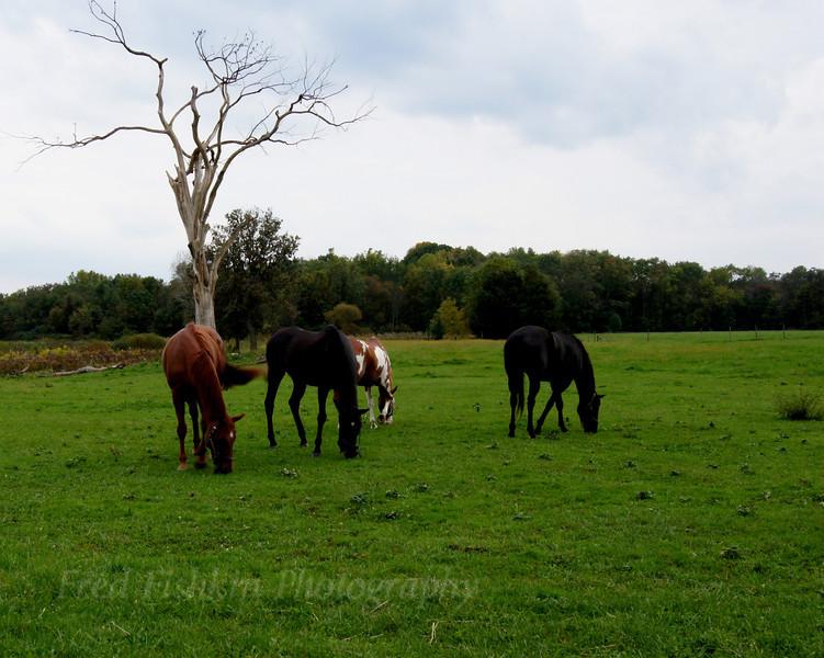 Jennings Tree and horses.jpg