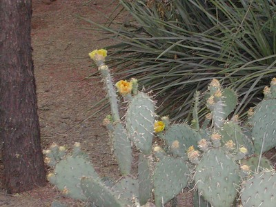 Sedona,AZ 4-2002