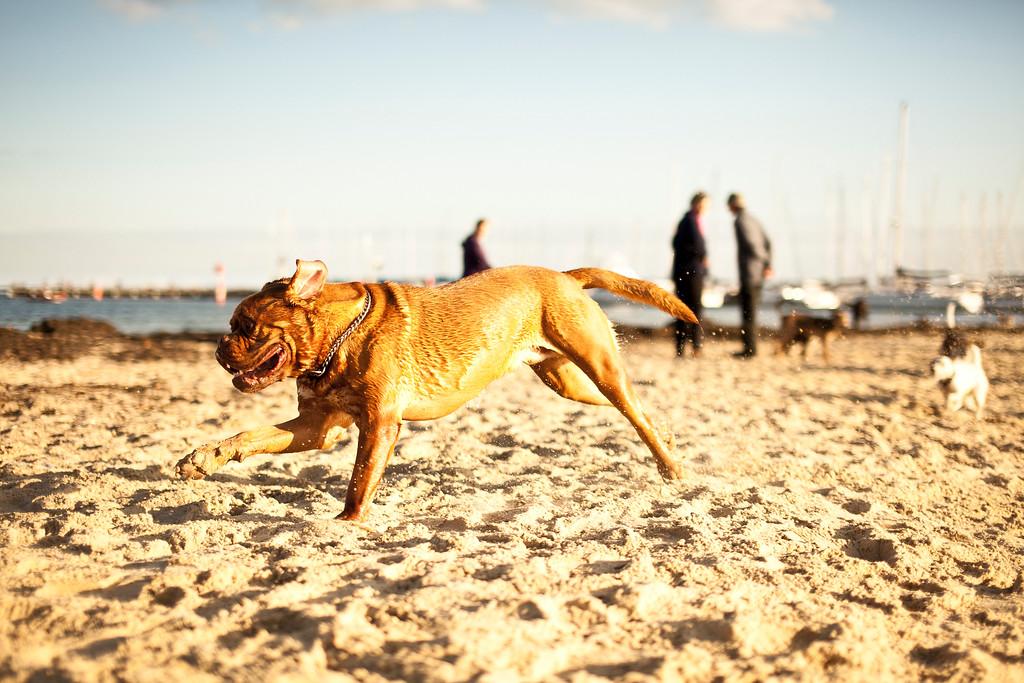 Dogsonbeach-AlexanderGardner-0026-20100614