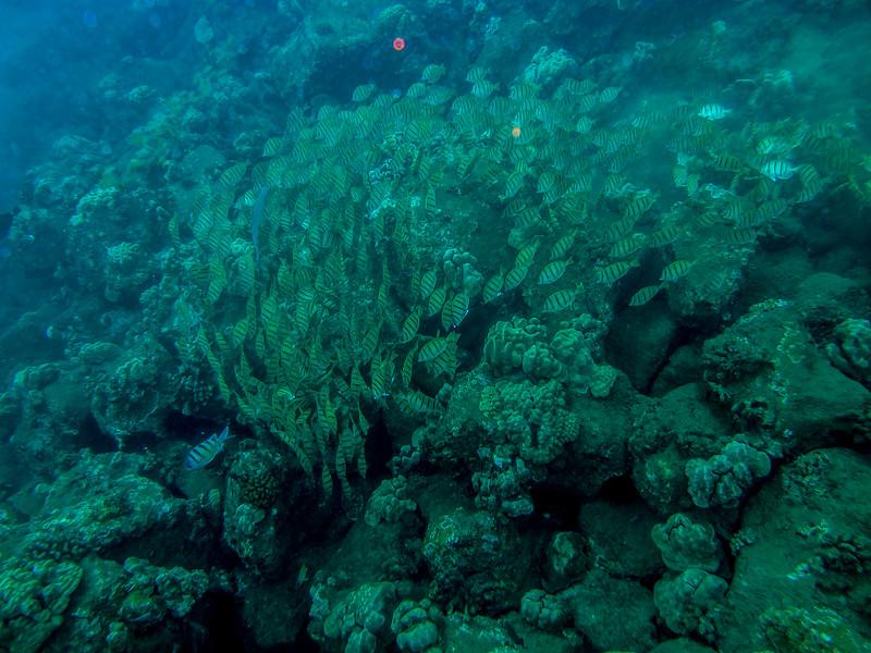 Hawaii diving - 053.jpg