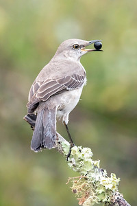 May 19, 2019 - Florida - Birds on Perches