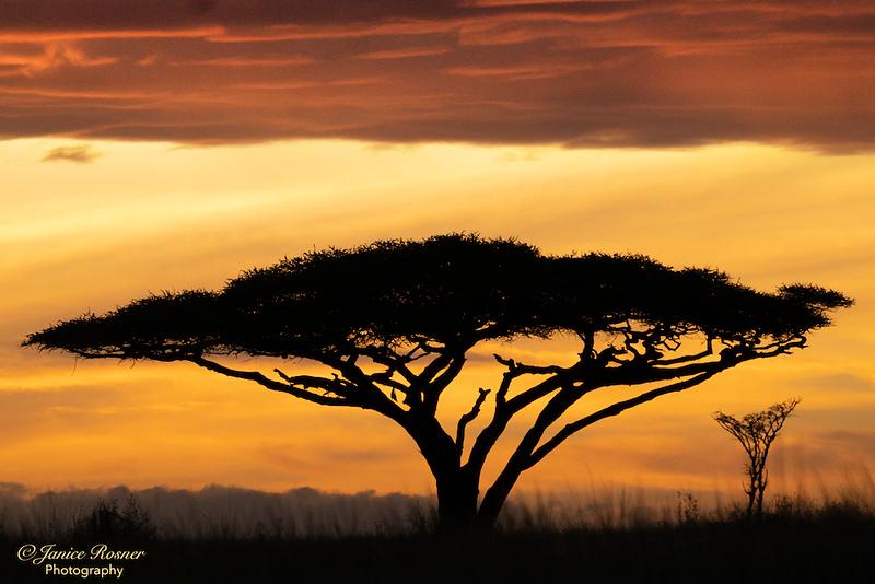 African Sunrise II
