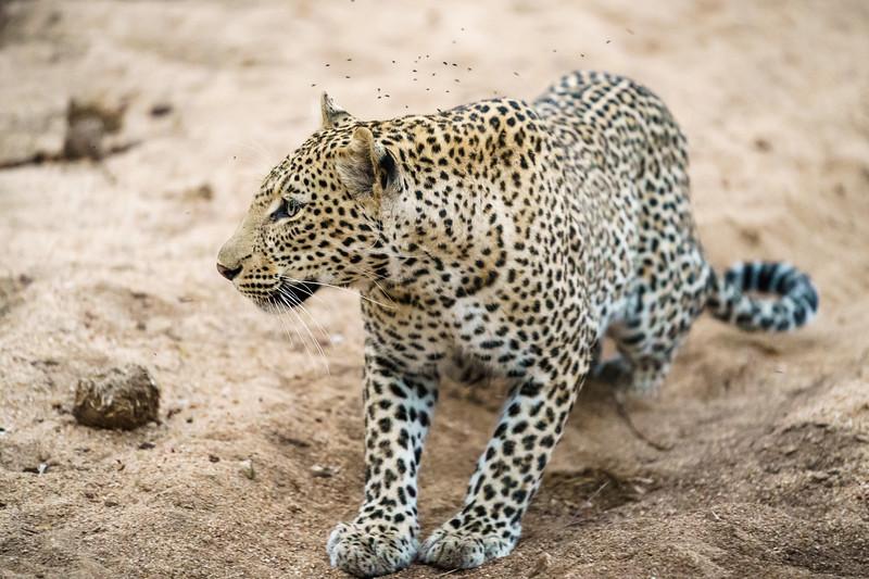 LeopardHills-20171022-0872.jpg