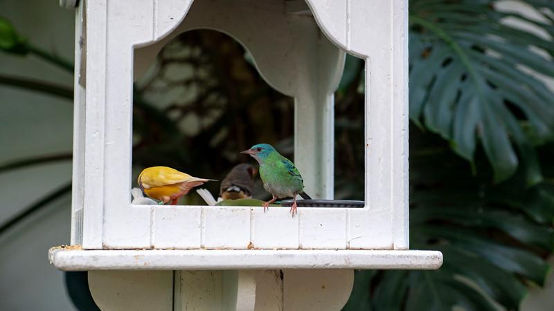 Florida-Keys-Key-West-Butterfly-Conservatory-09.jpg