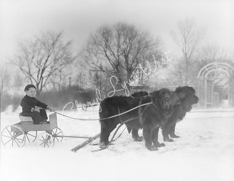 Boy-Newfoundland-Wagon-1-WM.jpg