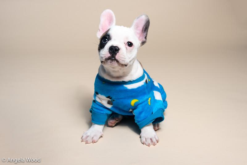 Puppies57.jpg