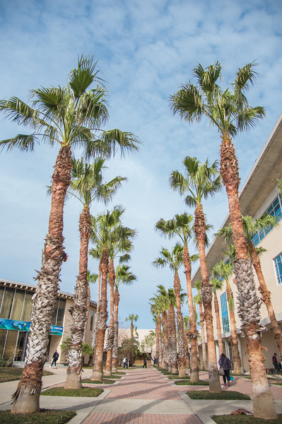 Palm trees reach into the sky on this beautiful day at the Island University.