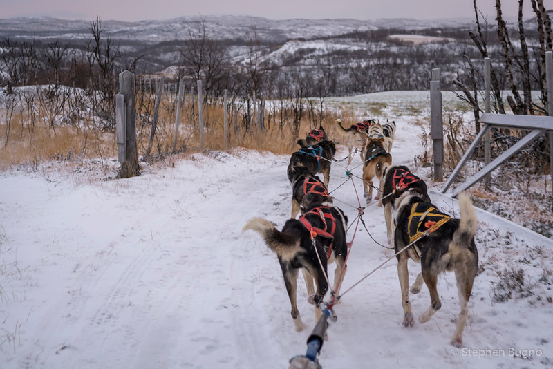 Dog Mushing-9723.jpg