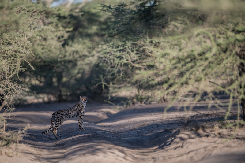 Tanzania_Feb_2018-152.jpg